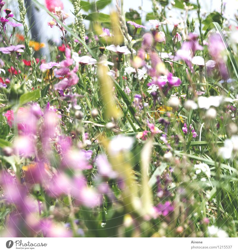 Floras Cornucopia II Plant Flower Meadow flower Flower meadow Blossoming Growth Friendliness Bright Green Pink Nature Surplus Many Colour photo Exterior shot
