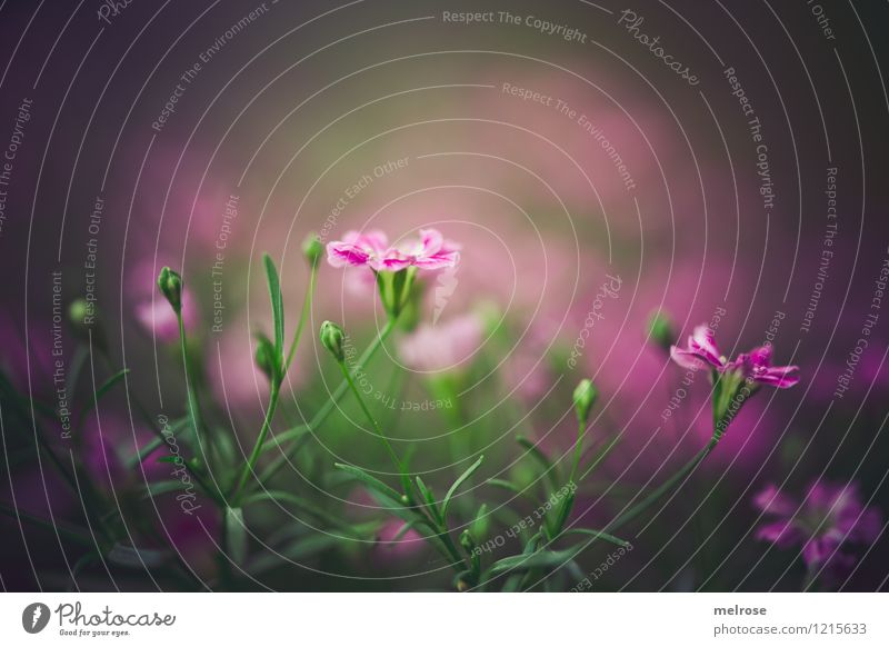 gloomy for the WE Elegant Style Nature Summer Beautiful weather Flower Grass Wild plant Bud Flower stem Garden Bright spot Blossoming Discover Illuminate Growth