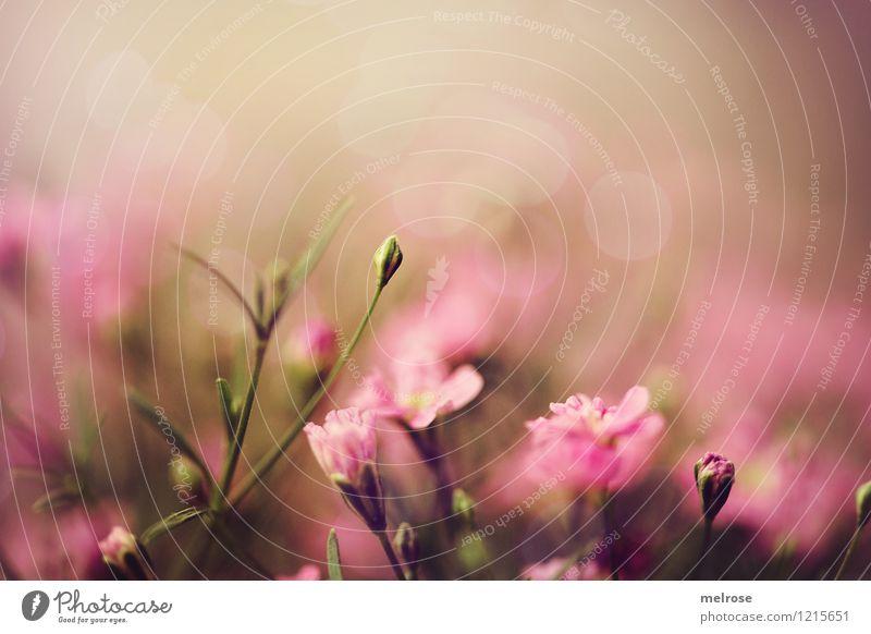 Nature Plant Beautiful Green Summer Relaxation Flower Calm Blossom Style Garden Moody Pink Glittering Dream Illuminate