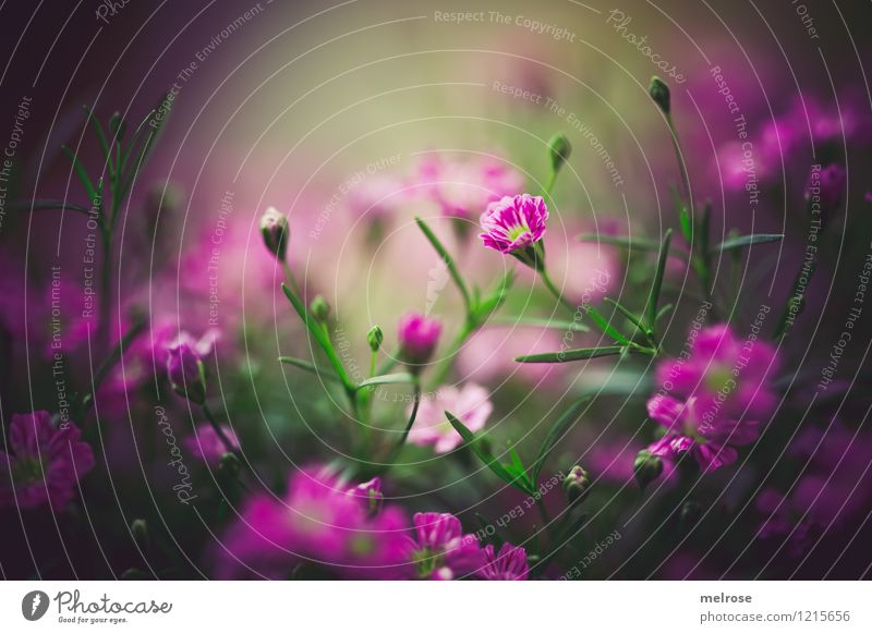 Nature City Plant Beautiful Green Summer Relaxation Flower Calm Blossom Meadow Grass Style Brown Moody Pink