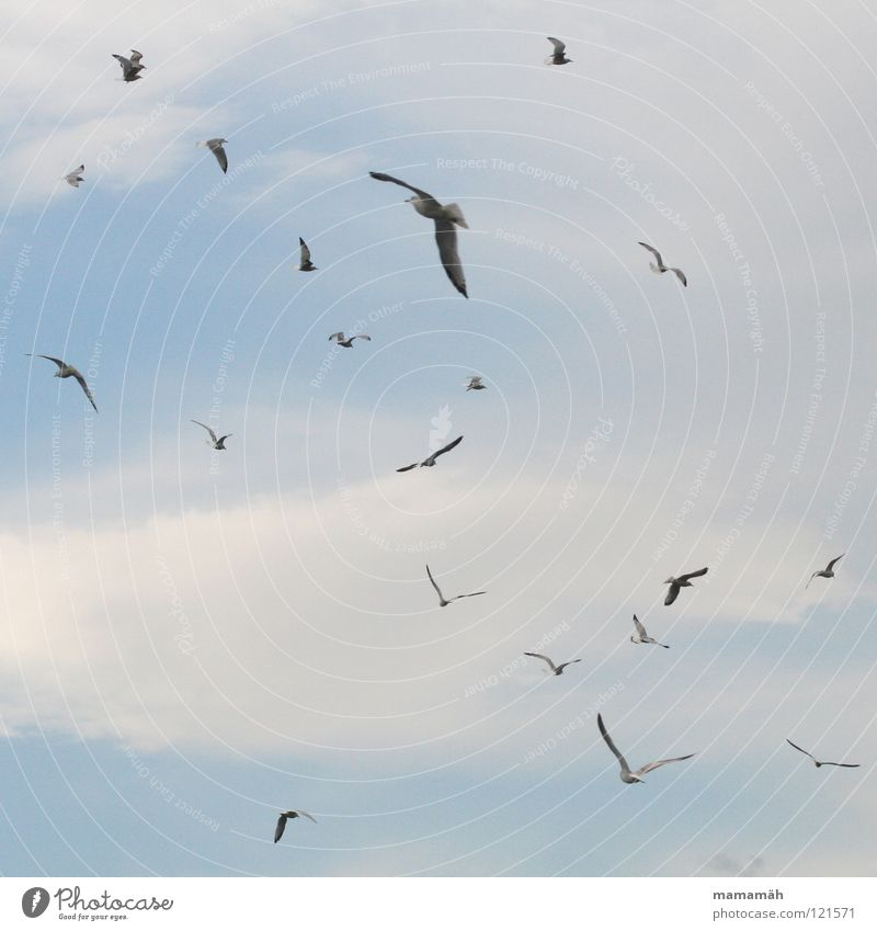 Sky Clouds Air Bird Flying Aviation Seagull Hover Scare Glide Judder