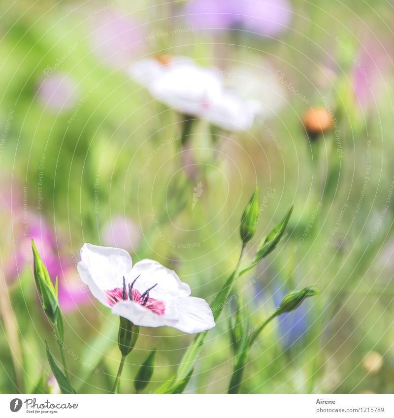 Greeting from Flora 1 Plant Flower Wild plant Meadow flower Flower meadow Blossoming Growth Fragrance Friendliness Bright Green Orange Pink White Nature