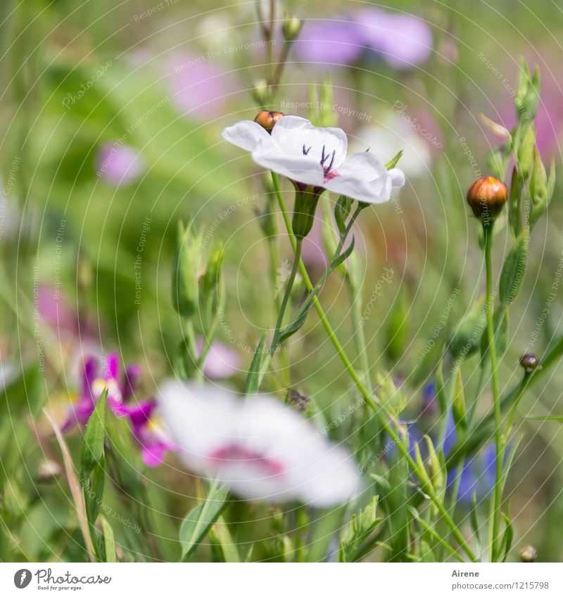 Floras Cornucopia V Plant Flower Meadow flower Flower meadow Blossoming Growth Friendliness Bright Green Pink White Nature Colour photo Exterior shot Close-up