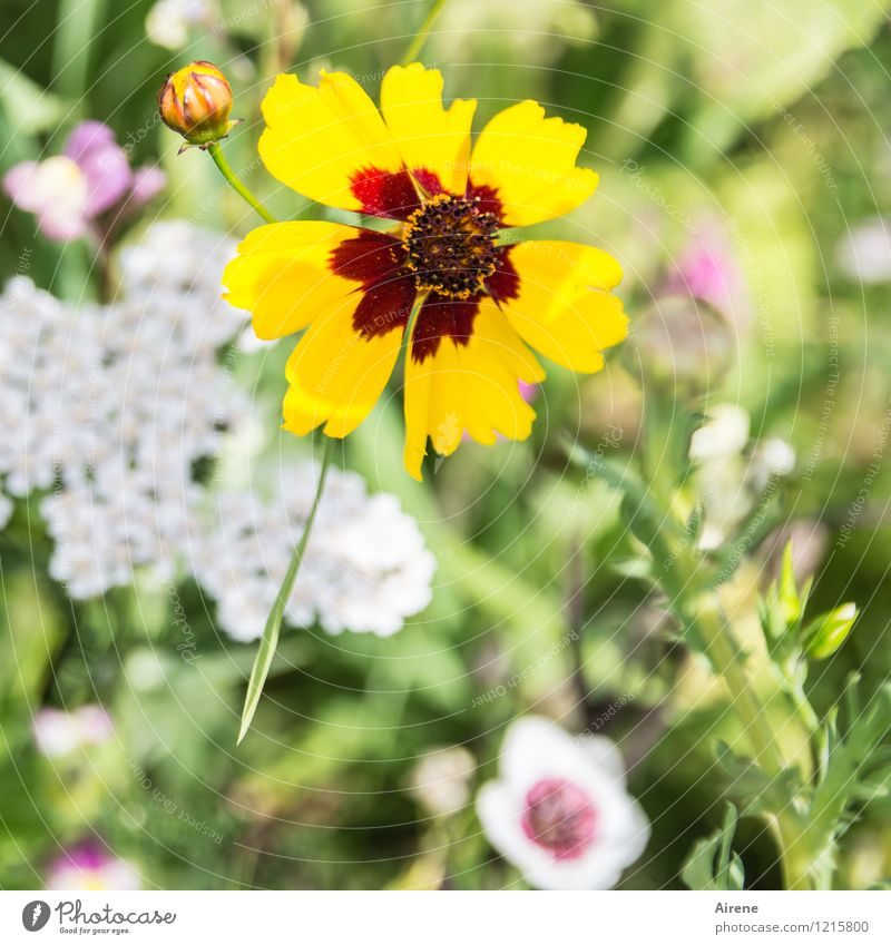Floras Cornucopia IV Plant Flower Meadow flower Flower meadow Blossoming Growth Friendliness Bright Yellow Green Red White Nature Colour photo Exterior shot