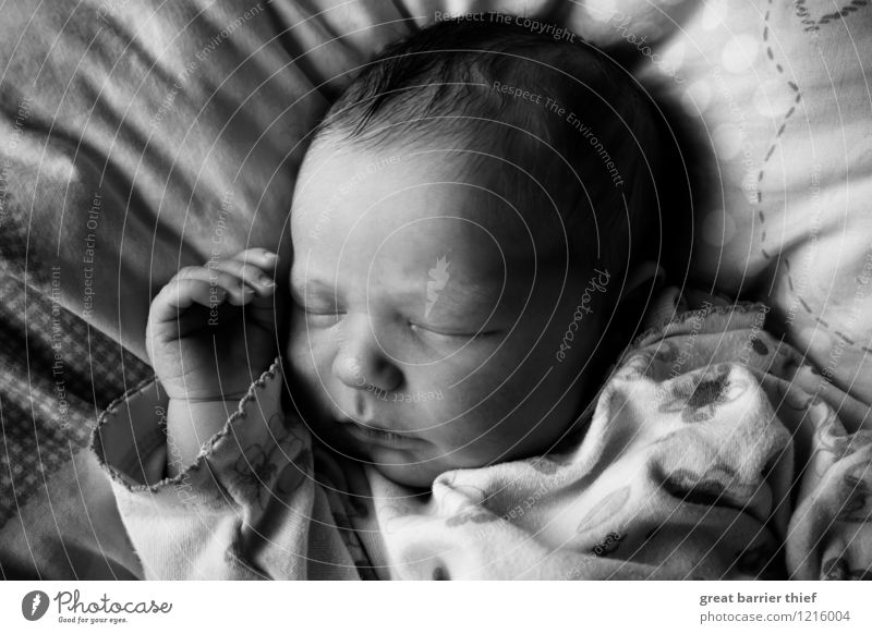 Sleeping baby Feminine Baby Head 1 Human being 0 - 12 months Thin Happy Beautiful Small Positive Gray Black White Exhaustion Birth Dream Black & white photo