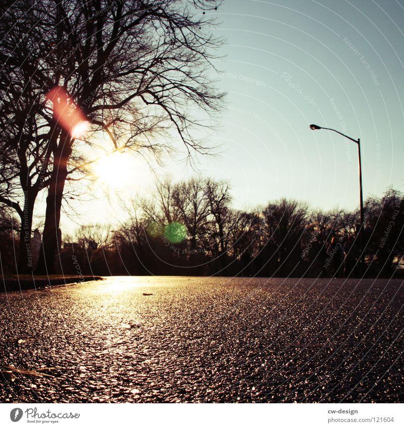 Tree Sun Winter Street Dark Autumn Gray Park Bright Rain Going Leisure and hobbies Wet Fresh High-rise Running sports