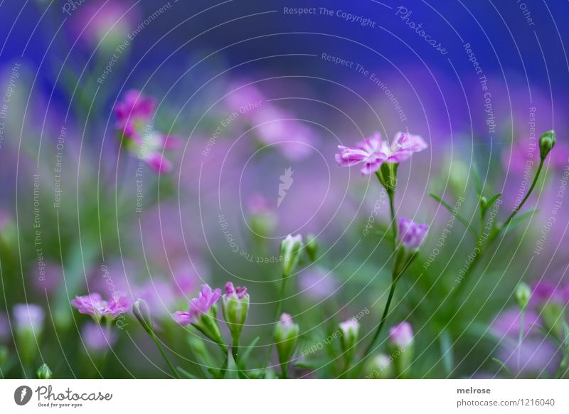 Nature Blue Green Summer Flower Calm Cold Blossom Style Small Garden Moody Pink Illuminate Growth Elegant