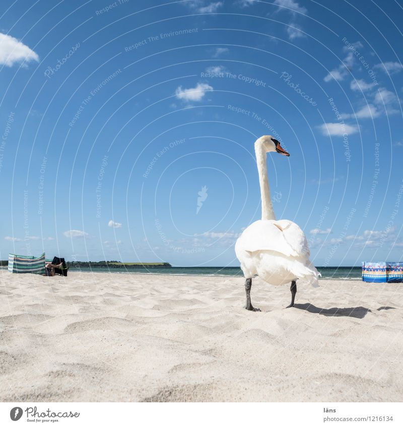 Everything at a glance Vacation & Travel Tourism Trip Far-off places Summer Summer vacation Sun Sunbathing Beach Ocean Sand Sky Clouds Coast Animal Wild animal