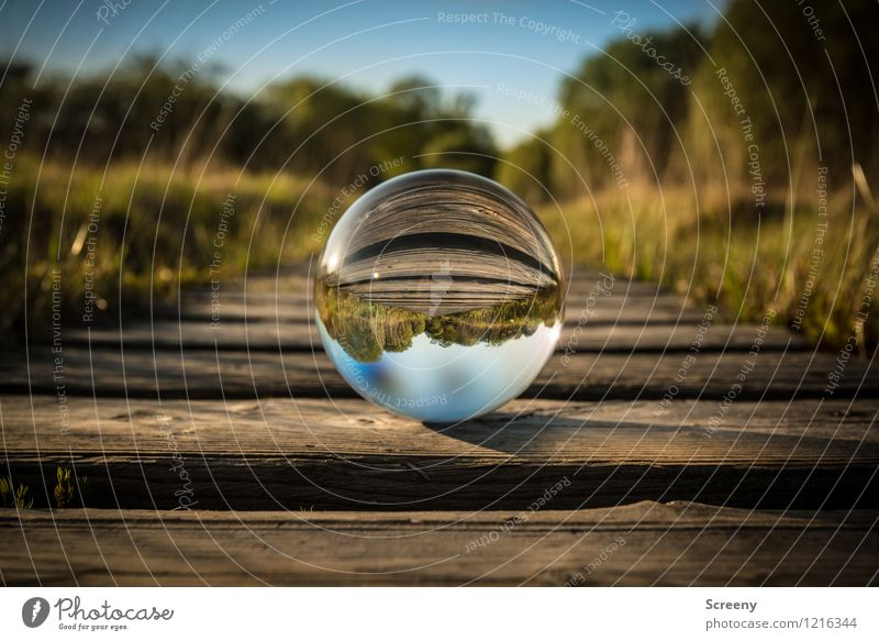 Worlds #7 Nature Landscape Plant Sky Cloudless sky Sunlight Spring Summer Beautiful weather Meadow Eifel High venn Bog Glass ball Crystal ball Footbridge Round