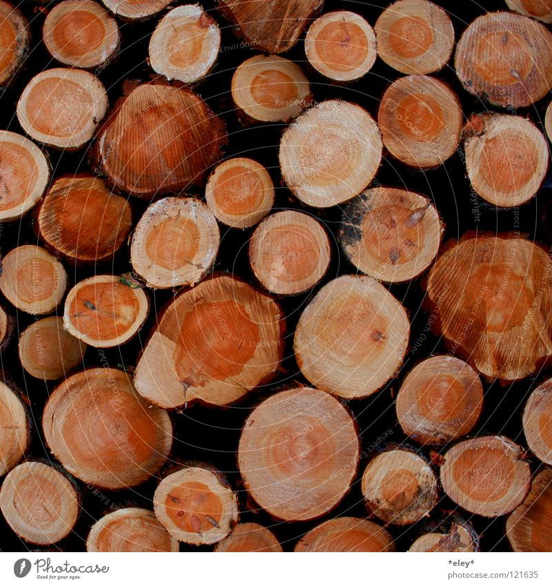 wooden wood Wood Physics Tree Multiple Tree trunk Logging Forest death Winter Autumn Firewood Annual ring Brown Warmth Wood grain Many tree beetle Hut