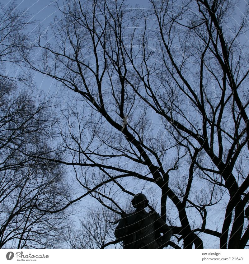 Human being Sky Nature Man Blue Beautiful Tree Clouds Winter Dark Forest Black Autumn Movement Background picture Art