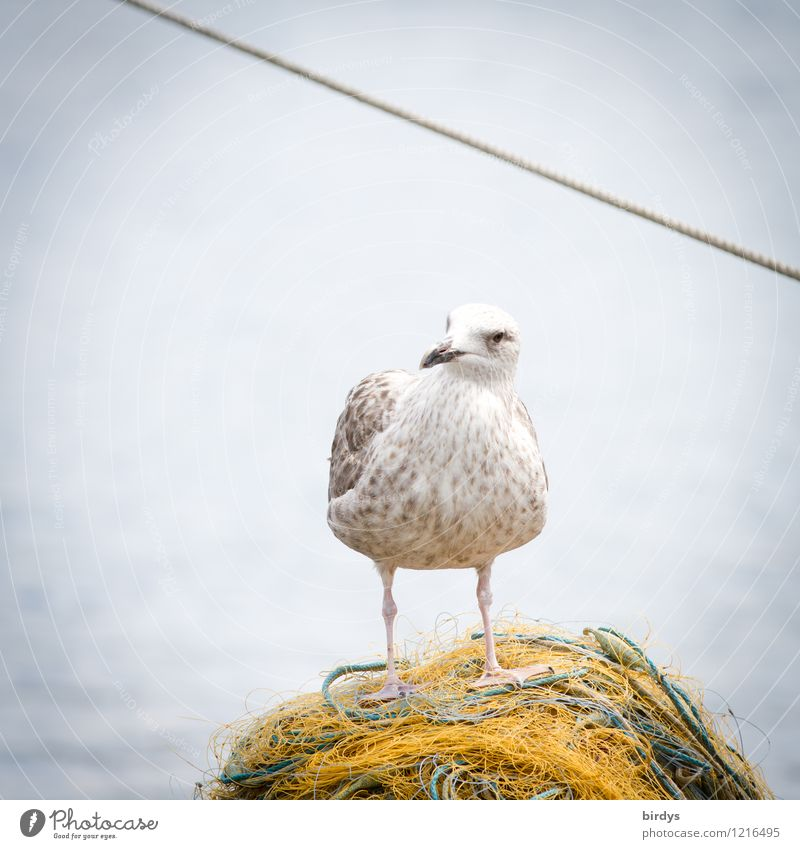 What now? No fish? Fishery Water Coast North Sea Baltic Sea Ocean Seagull 1 Animal Fishing net Rope Observe Stand Wait Esthetic Brash Positive Optimism Patient
