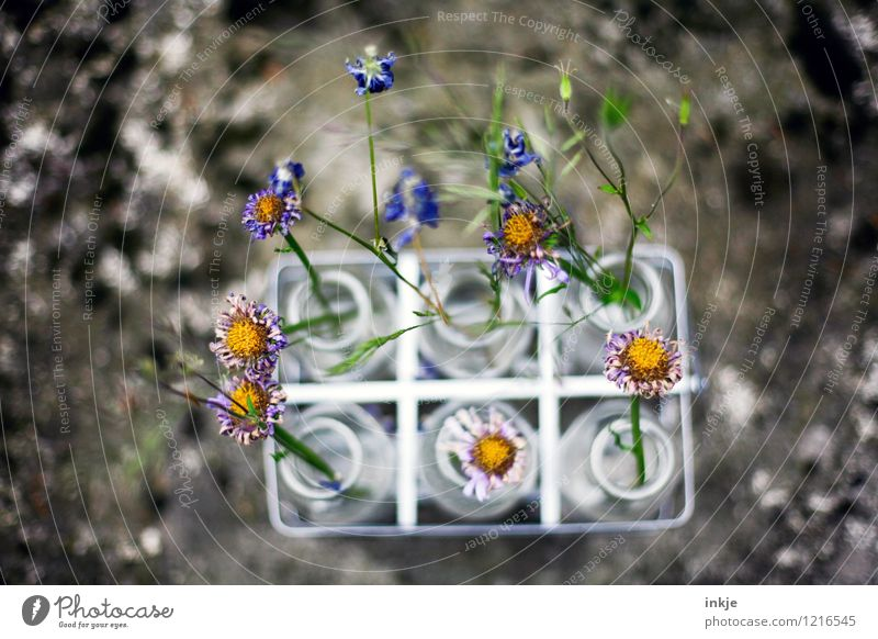Beautiful Flower Blossom Style Small Lifestyle Leisure and hobbies Decoration Blossoming Transience Change Dry Bouquet Under Geometry Vase