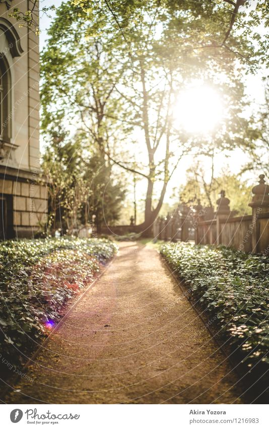 everything will be fine Sun Beautiful weather Plant Tree Bushes Ivy Garden Town House (Residential Structure) Building Wall (barrier) Wall (building) Facade