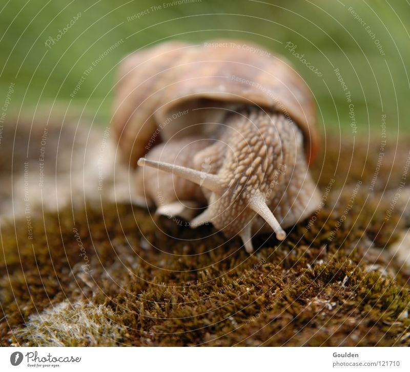 Nature Calm Movement Time Speed Nutrition Observe Tower France Boredom Snail Sporting event Politics and state Crawl Feeler Reptiles