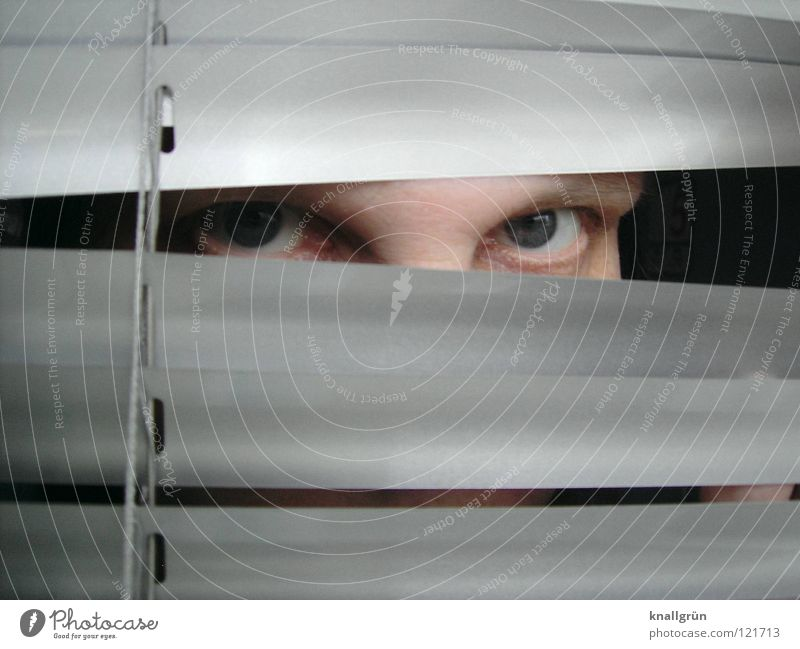 eye contact Venetian blinds Woman Eyes Looking blue eyes Disk Silver Bright Hide