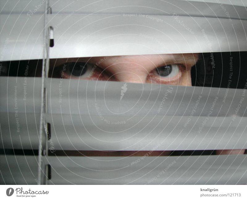 Woman Eyes Bright Hide Silver Venetian blinds Disk