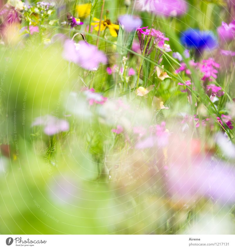 Greeting from Flora 2 Plant Flower Wild plant Meadow flower Flower meadow Blossoming Growth Friendliness Bright Blue Multicoloured Yellow Green Pink Nature