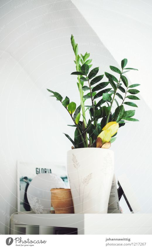 green on white. Plant Esthetic Elegant Idyll Uniqueness Inspiration Contentment Foliage plant Green White Interior design Youth (Young adults) Room Bedroom