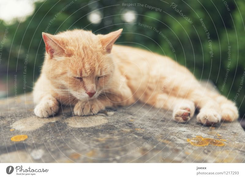 Too hot! Nature Summer Cat 1 Animal Lie Sleep Hot Brown Green Serene Calm Fatigue Exhaustion Relaxation Colour photo Exterior shot Deserted Day Animal portrait
