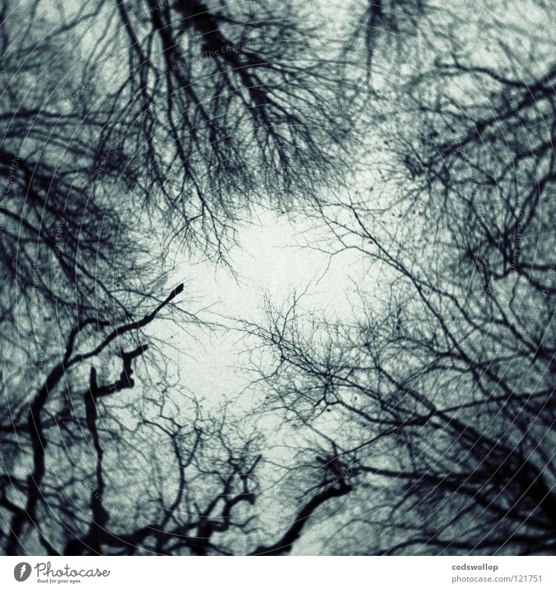 Tree Forest Dark Dream Fear Branch Creepy Doomed Panic Wood flour Midnight Spook
