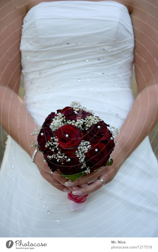 wool rose buy ? Lifestyle Wedding Feminine Woman Adults Arm Accessory Red White Happy Contentment Joie de vivre (Vitality) Together Love Infatuation Loyalty