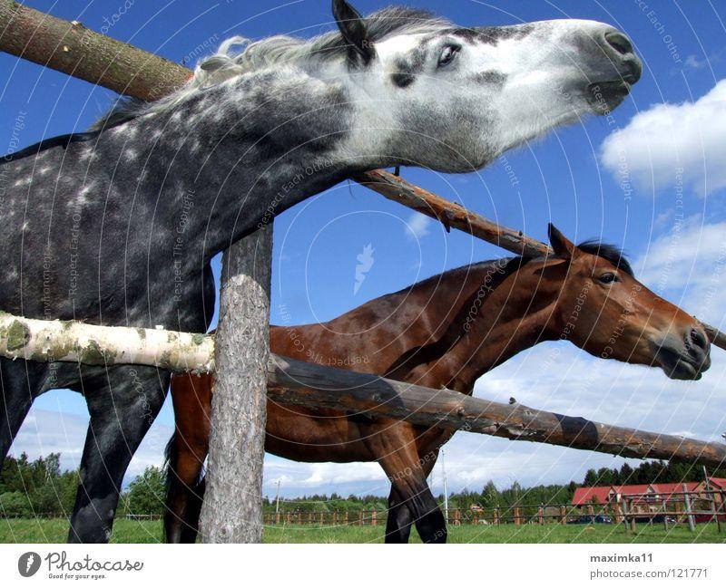 The urge for freedom Horse Needs Fence Animal Longing Mammal Nature wilderness Freedom