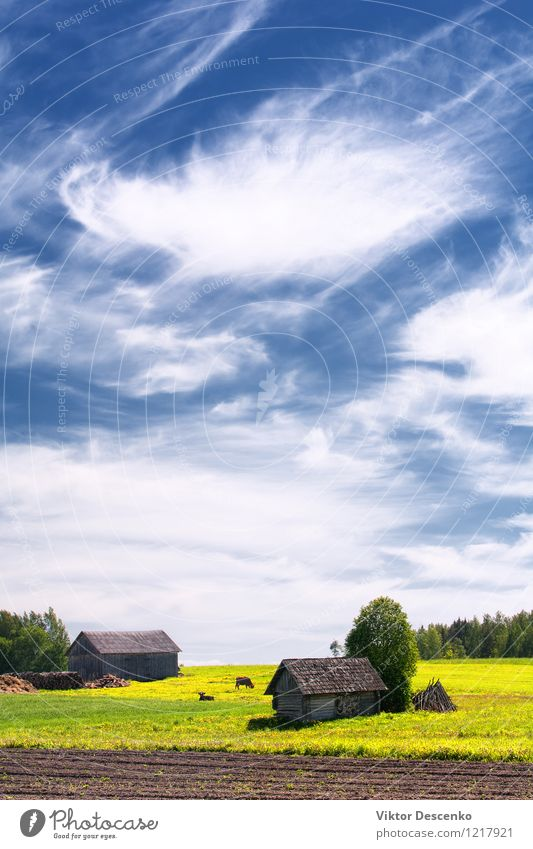 Rural house with field and cows Green Sun Tree Flower Landscape Clouds Animal House (Residential Structure) Architecture Meadow Grass Horizon Business Weather