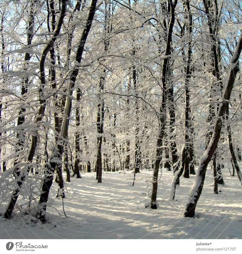 In the fairytale forest there ist´s so cold! White Winter Cold January Tree Fairy tale Minus degrees Forest Transport Snow buckle Cover Frost To go for a walk