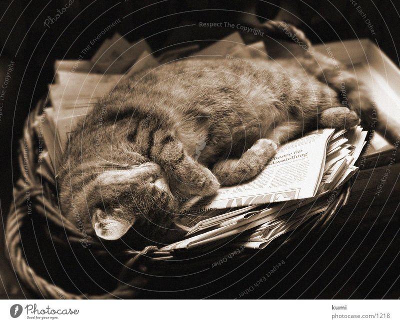 Lisa vom Carsten sleeping cat
