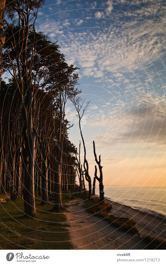 ghost forest Relaxation Calm Vacation & Travel Nature Landscape Clouds Weather Beautiful weather Tree Forest Coast Baltic Sea Ocean Romance Idyll Environment