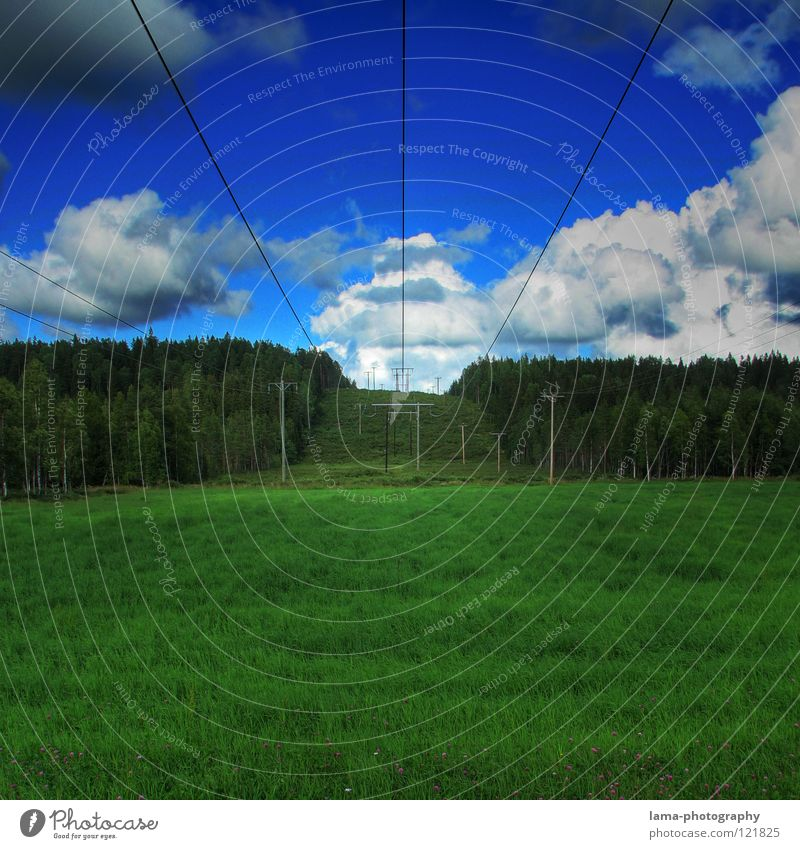 In the land of the moose II Meadow Grass Green Field Structures and shapes Forest Edge of the forest Tree Coniferous forest Flower Sun Summer Spring Physics