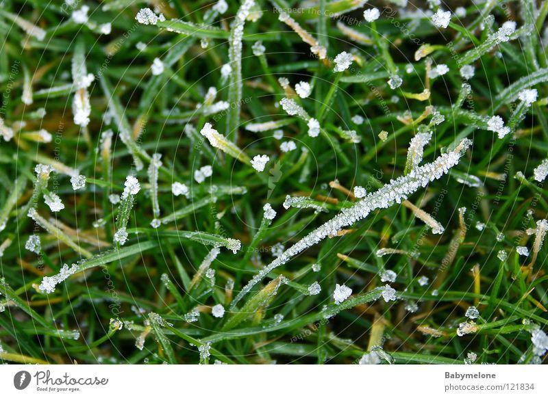 Nature Green Winter Cold Snow Meadow Grass Ice Glittering Frost Frozen Freeze Blade of grass November Hoar frost December