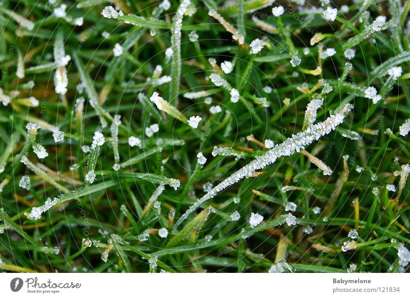 The remains of winter Ice Winter Cold Grass Frozen Freeze Blade of grass Glittering December November January February Hoar frost Green Morning Meadow Frost