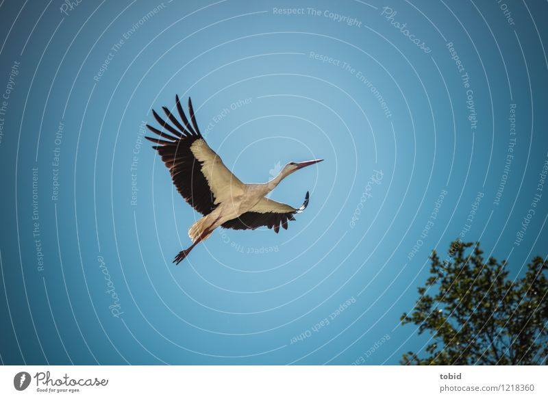 Sky Nature Plant Beautiful Summer Tree Animal Far-off places Movement Freedom Flying Above Bright Elegant Wild animal