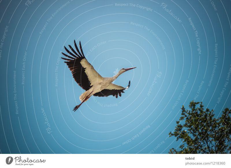 Spreedorado Fly away. Summer Nature Plant Animal Sky Cloudless sky Beautiful weather Tree Wild animal Stork 1 Movement Flying Esthetic Elegant Free Infinity