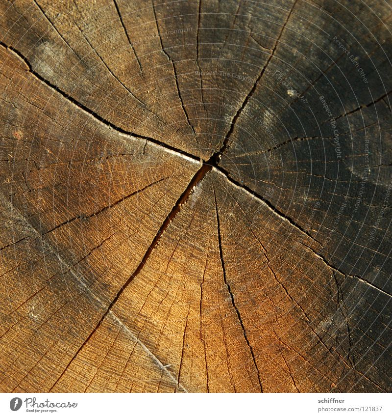 Nature Old Winter Environment Autumn Wood Brown Climate Tree trunk Environmental protection Crack & Rip & Tear Forestry Tree felling Heat Wood grain Center point