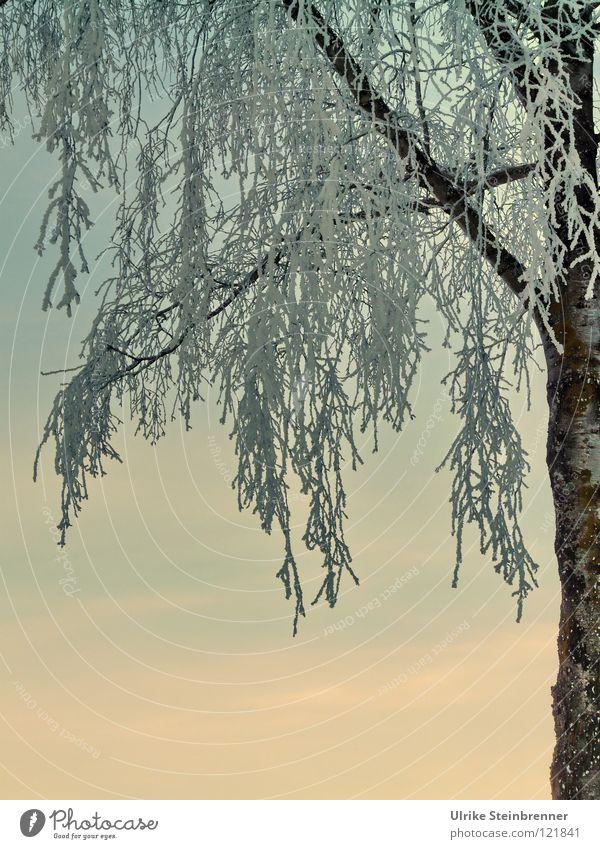 Nature Sky White Tree Plant Winter Cold Snow Ice Fresh Frost Change Branch Frozen Freeze Drape