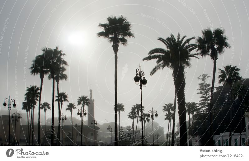 Palms in the fog Environment Nature Plant Sky Summer Weather Fog Tree Park Tangiers Morocco Africa Town Port City House (Residential Structure) Places Dark Tall