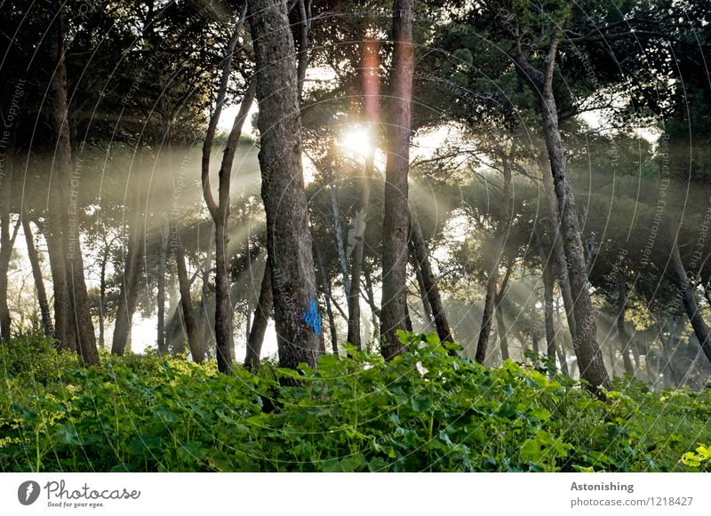 the Moroccan sun Environment Nature Landscape Plant Air Sun Sunrise Sunset Sunlight Summer Weather Beautiful weather Tree Bushes Park Forest Bright Green Black