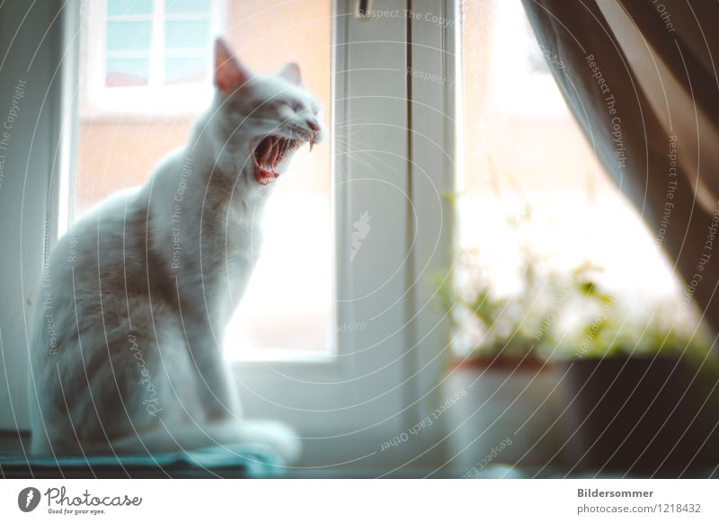 After the nap, before the nap. Window Animal Pet Cat 1 Sit Funny Blue Green White Moody Contentment Fatigue Indifferent Comfortable Animalistic Yawn Weekend
