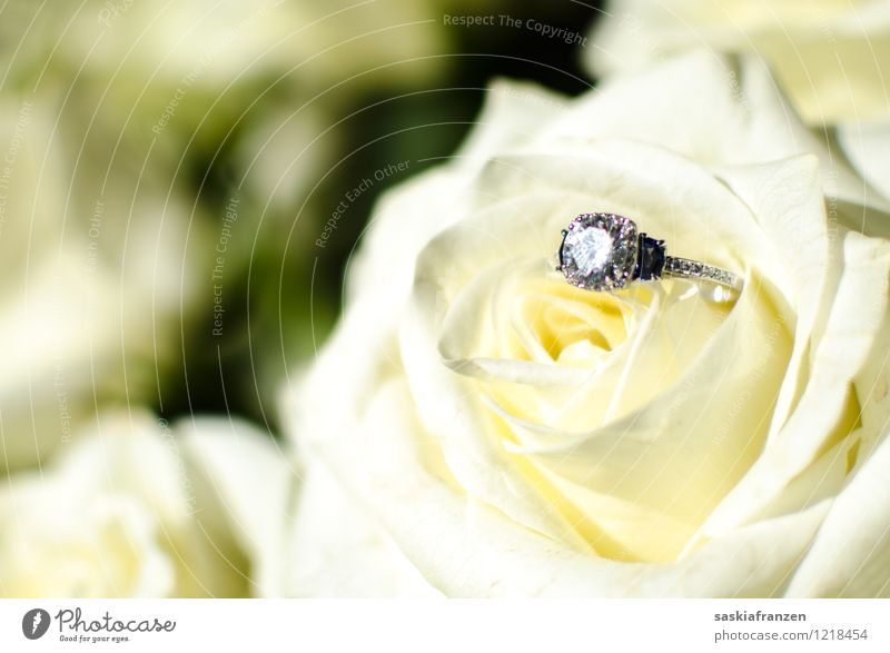 Put a ring on it. Feasts & Celebrations Wedding Plant Flower Rose Accessory Jewellery Ring Sign Exceptional Elegant Glittering Relationship Eternity