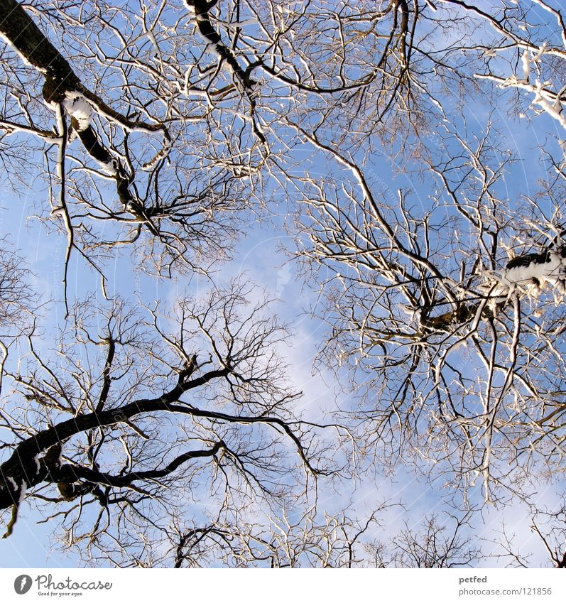 aste Tree Winter Worm's-eye view Forest To go for a walk Leisure and hobbies Clouds White Brown Blue Sky Tall Upward Branch Twig Tree trunk Nature