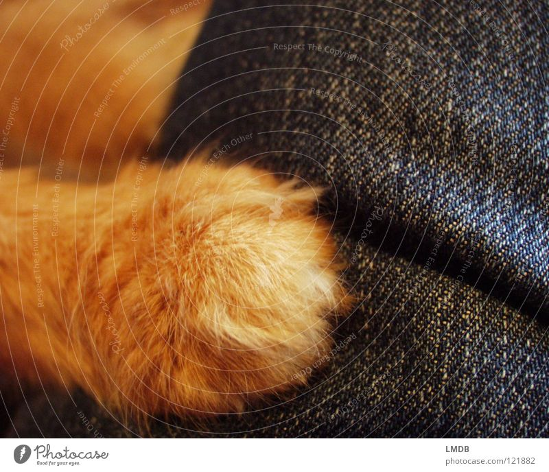 Give paw! Cat Animal Pelt Red Paw Cuddling Cuddly Animal lover Love of animals Pet Possessions To hold on Lie Hand Jeans Denim Plush Protection Scratch Claw