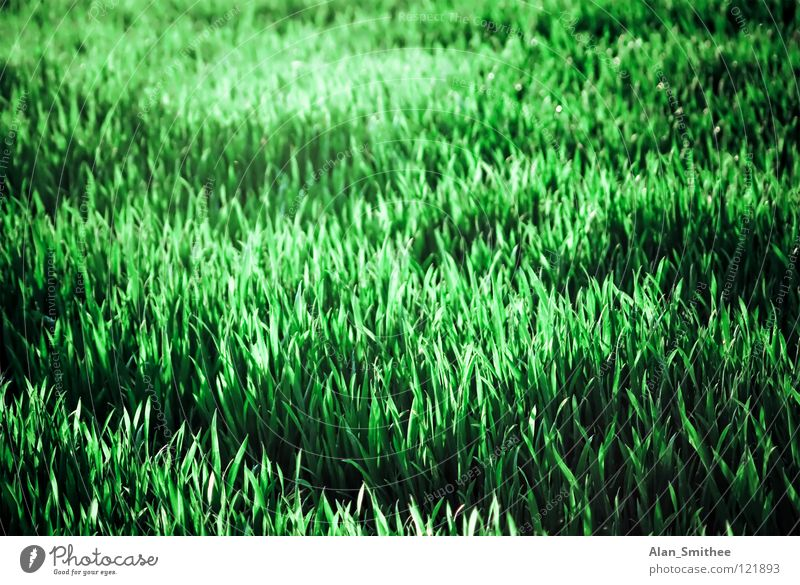 Nature Green Summer Meadow Grass Park Background picture Lawn Floor covering