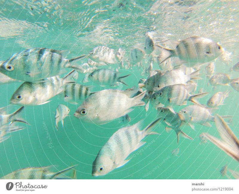 underwater Leisure and hobbies Vacation & Travel Trip Adventure Freedom Nature Animal Fish Group of animals Moody Snorkeling Dive Shoal of fish Seychelles