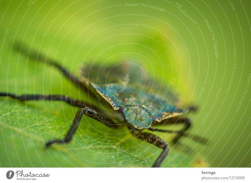 Animal Flying Animal face To feed Crawl Beetle Bug
