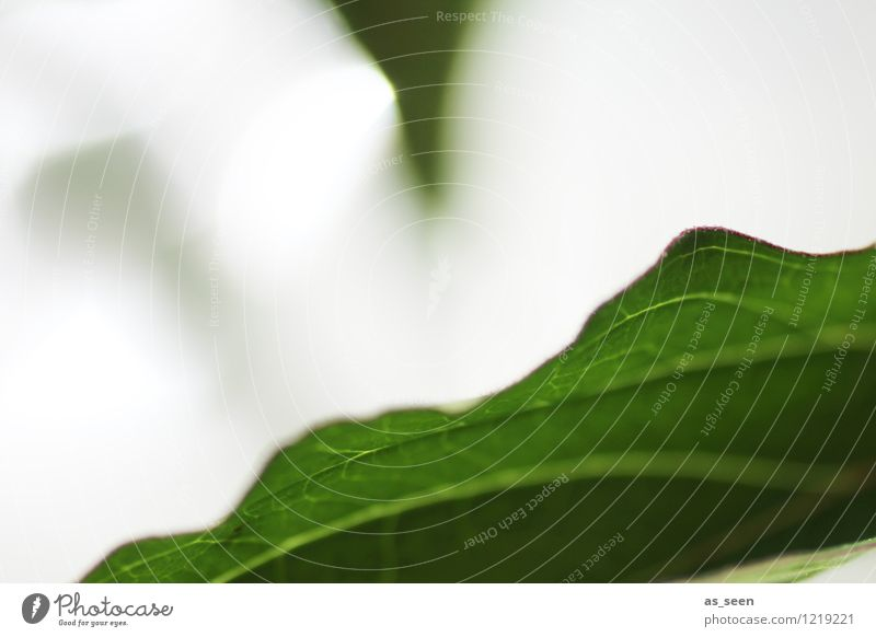 Nature Vacation & Travel Plant Green Summer Sun Tree Leaf Calm Life Movement Natural Healthy Garden Moody Contentment