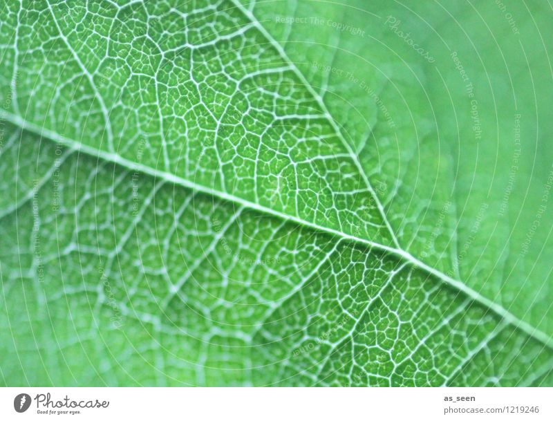 Nature Plant Beautiful Green Colour Summer Leaf Calm Life Spring Lanes & trails Healthy Garden Health care Growth Esthetic