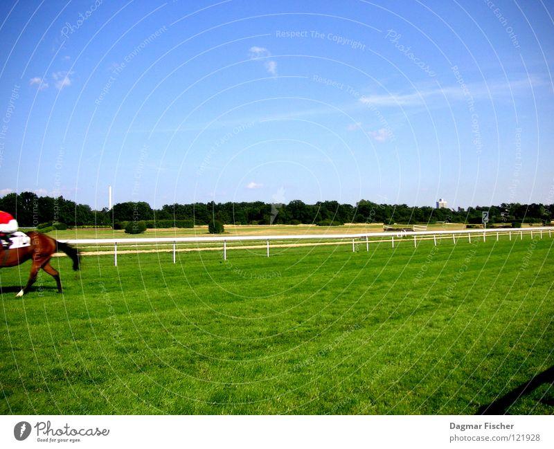 Sky Blue Green Sports Grass Walking Success Horse Lawn Handrail End Hind quarters Racing sports Cologne Mammal Racecourse